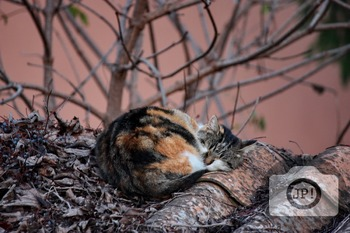 124 - ANIMALS AND BIRDS - Cat [By Just Photos!]