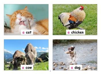 131 Animal FlashCards with Vocabulary