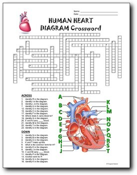 14 Anatomy Diagram Crosswords Bundle - 30% OFF {All Editable}