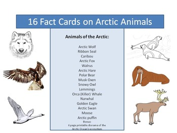 Arctic Animals- 16 fact cards!