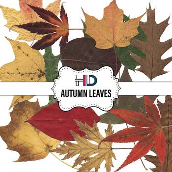 14 Autumn Tree Leaves Digital Clip Art Maple Oak Aspen Deciduous