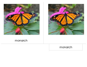 14 cm Montessori 3-Part Nomenclature Cards:  Butterflies - Eastern North America