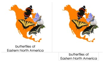 14 cm Montessori 3-Part Nomenclature Cards:  Butterflies - Eastern North America