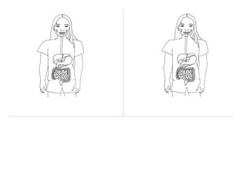 14 cm Montessori 3-Part Scientific Nomenclature Cards:  Digestive System