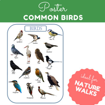 Birds! 15 Different Types - A3 Poster