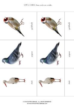 15 Different Birds - Montessori Printable