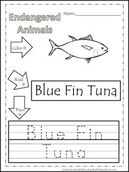 15 Endangered Animal themed printable preschool worksheets. Color, Read, Trace