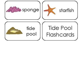 15 Tide Pool Printable Flashcards. Preschool-3rd Grade