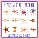 1500 Upload Freebie!  Sea Stars Photos / Photographs Clip Art For Commercial Use