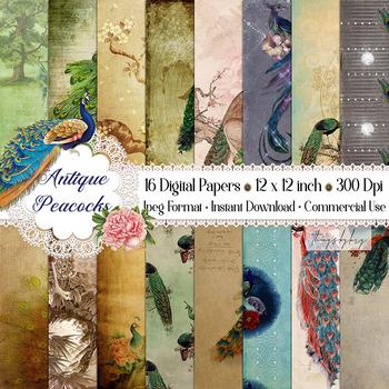 16 Antique Gorgeous Peacock Ephemera Peacock Digital Papers