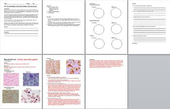 16 Biology Laboratory Lessons + 24 Pages of Lab Test Prep Questions Bundle