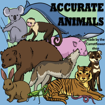 17 Accurate Animals - Clip Art by the Carrotflower Shop
