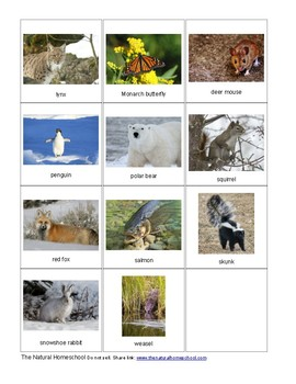 17 Printable Pictures of Animals that Adapt in Winter