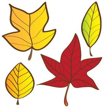 Autumn Leaves Clipart Set - Fall Leaves 18 Piece Set - Color & Blackline