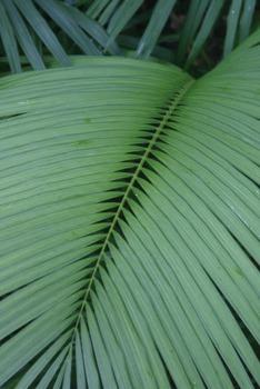 18 Sensei-tional World Heritage Rainforest Photos: Set 2