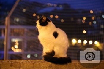 199 - ANIMALS AND BIRDS - CAT [By Just Photos!]