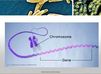 1st Grade Life Science - Genetics