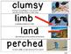 1st Grade ReadyGEN Vocabulary Cards Unit 1 Module A