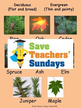 1st to 2nd Grade Plants Bundle (11 lessons)