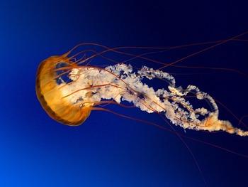 QA Testing: Jelly Fish Theory