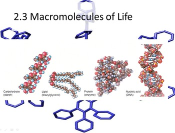2.3 Macromolecules Guided notes and PowerPoint