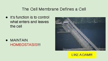 2.4 and 2.5 Plasma Membrane Structure and Permeability