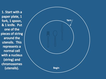 2-Day Lesson Introduction to Mitosis