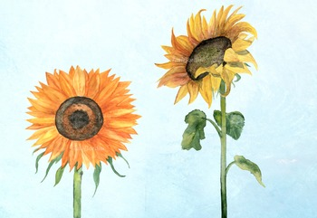2 PNG + 2 JPG Sunflower Watercolor Clip Art - Decor - Printable