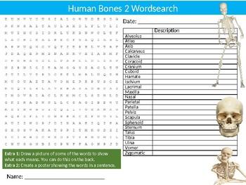 2 x Human Bones Wordsearch Puzzle Sheet Activity Keywords Biology Anatomy