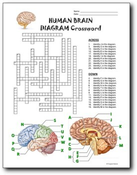 21 Biology Diagram Crosswords BUNDLE {Editable}