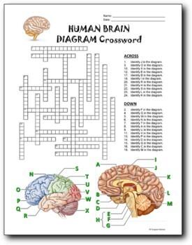 21 Biology Diagram Crosswords BUNDLE {Editable}