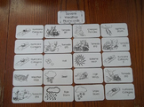 20 Laminated Severe Weather Flash Cards.   Meteorology Picture Word Card