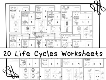 20 Life Cycles Printable Worksheets in a PDF file.Preschool-KDG Science.