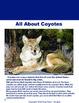 Reading Comprehension Passages Animals Volume 3 Grades 2-4