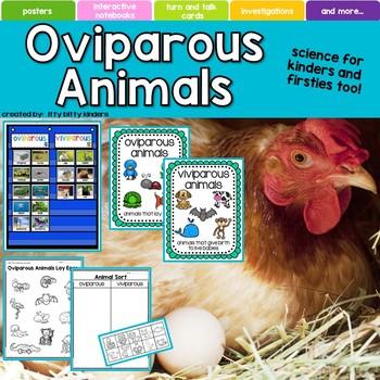 Oviparous Animals, eggs