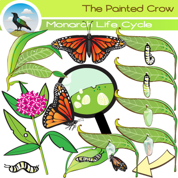 Monarch Butterfly Life Cycle Clip Art - Bug / Insect Clip Art