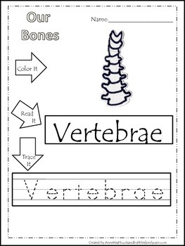 20 Our Bones printable  worksheets. Color, Read, Trace.