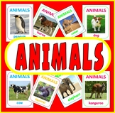 200 ANIMAL FLASH CARDS - SCIENCE DISPLAY