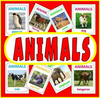 200 ANIMAL FLASH CARDS - SCIENCE DISPLAY