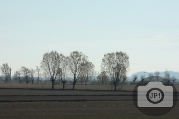 201 - NATURE ITALY - TREES [By Just Photos!]