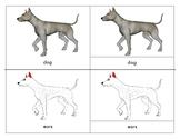 Dog: Montessori Three Part Cards and Six Dog Varieties