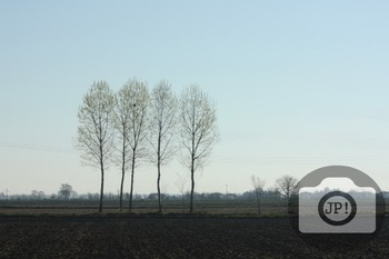 202 - NATURE ITALY - TREES [By Just Photos!]