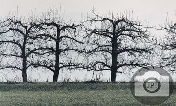 203 - NATURE ITALY - TREES [By Just Photos!]