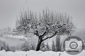 205 - NATURE ITALY - TREE [By Just Photos!]