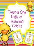 21 Days of Hatching Chicks