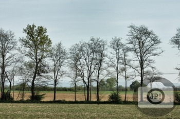 210 - NATURE ITALY - TREES [By Just Photos!]