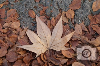216 - NATURE ITALY - LEAVES[By Just Photos!]
