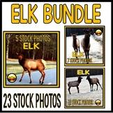 23 ELK Stock Photo BUNDLE