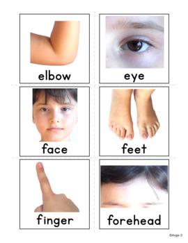 Body Parts Flashcards, Vocabulary Cards for Special Ed, ESL