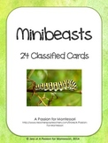 24 Minibeast Classified Cards Flash Cards